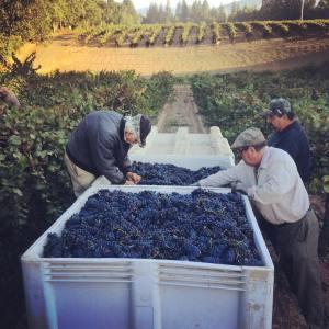 Farmstrong Vineyard